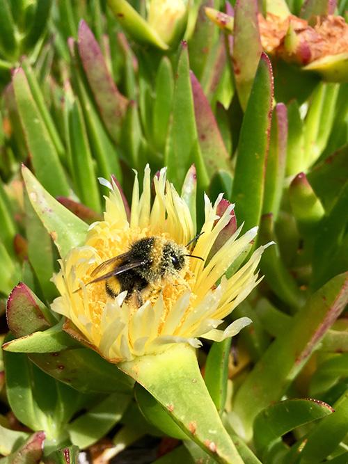 Bee-the-change-Bild-2-veganverlag-GrünerSinn-Verlag