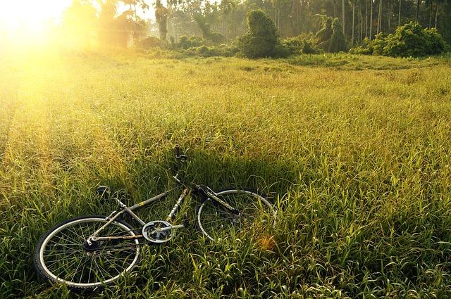 bicycle-241514_640-veganverlag-tag-des-waldes