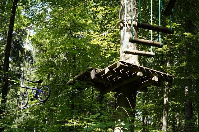 climb-788659_640-veganverlag-tag-des-waldes