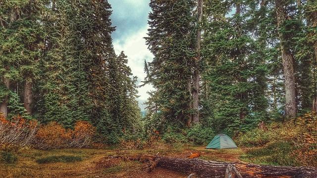 trees-2604594_640-veganverlag-tag-des-waldes