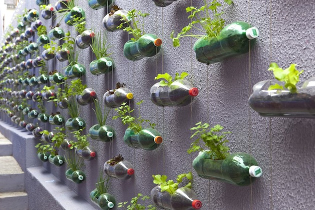 Müll-Upcycling-Plastic-Soda-Bottles-As-An-Urban-Garden-1