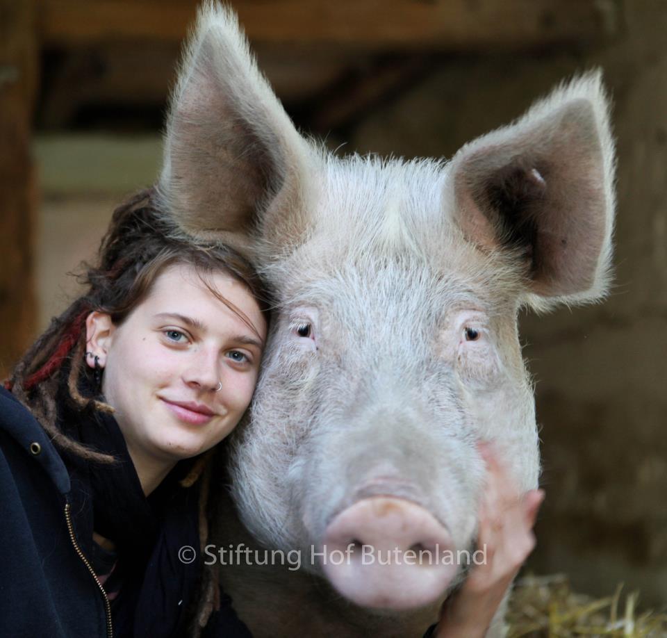 Hof-Butenland-Schwein