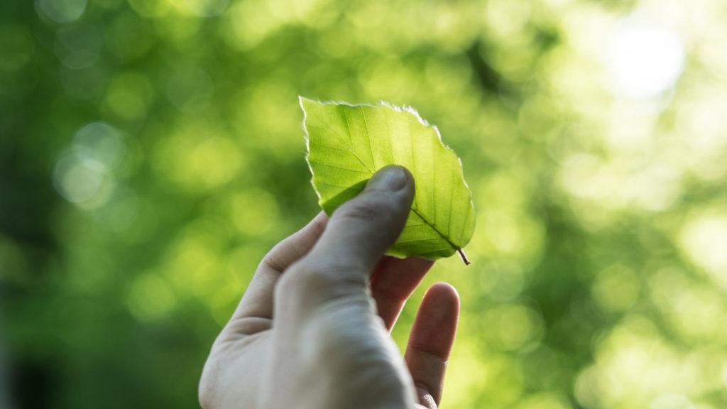 Wir versuchen unsere Druckerzeugnisse nicht nur so vegan, sondern ebenfalls so umweltfreundlich wie möglich zu produzieren.